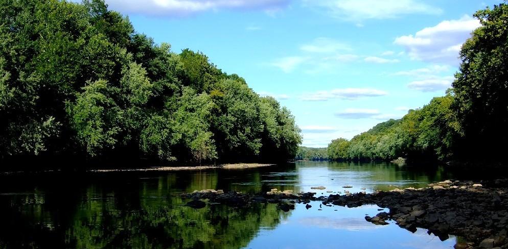 Giornata Internazionale dedicata dall'ONU alle foreste del pianeta