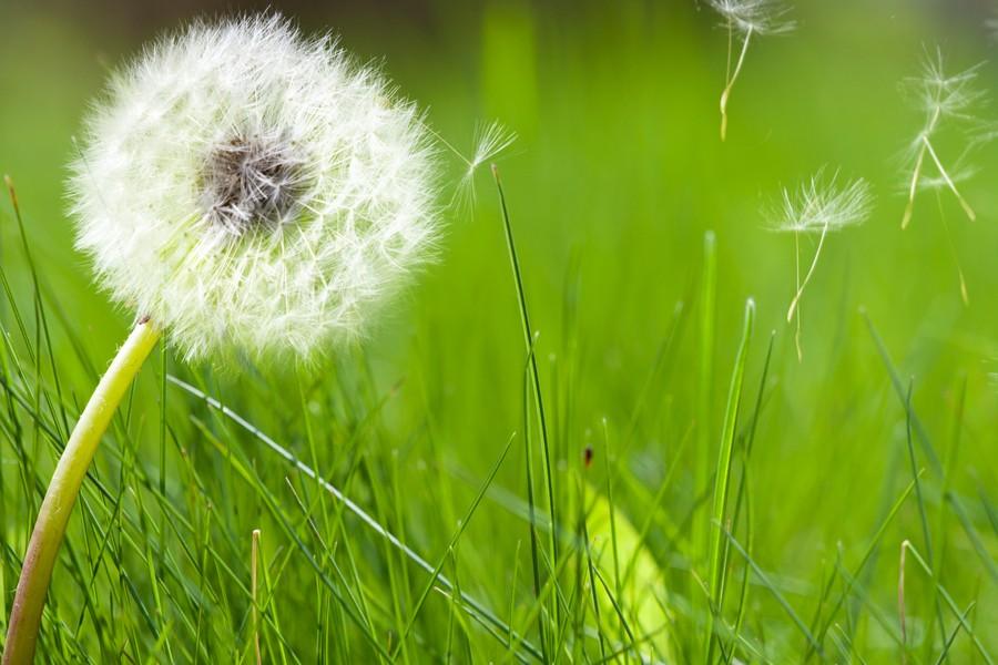 Allergia ai pollini