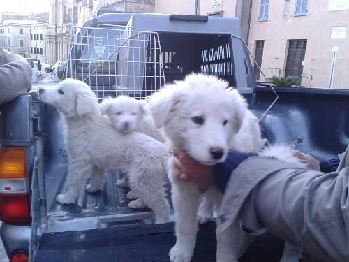 cuccioli abbandonati