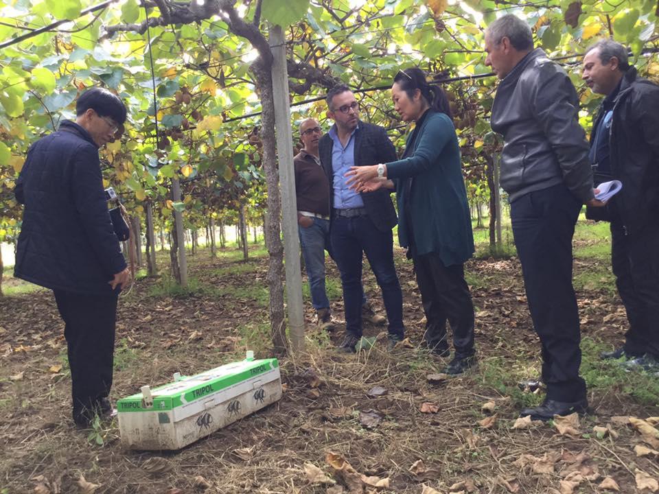 Ispettori coreani analizzano il kiwi italiano