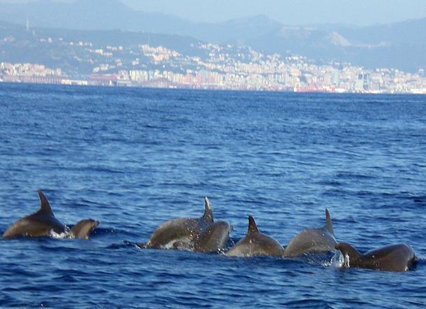 cetacei meliadotursopi a Genova