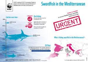 Infografica wwf pesce spada
